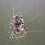 2008-02-24-Spider