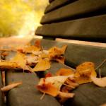 2009-10-31-Outono