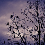 2010-12-18-Birds