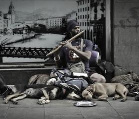 2011-06-24-Dog-whisperer