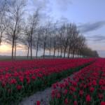 Netherlands-13